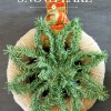 Christmas Greenery Snowflake