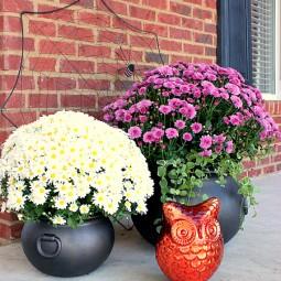 forged cauldron planters
