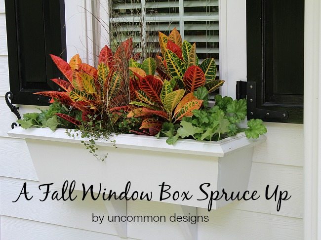 Fall Window box planting 101. Thriller-Filler-Spiller
