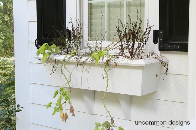 Fall window box spruce up