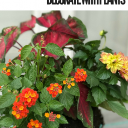 Bring on the color! Add beautiful plants to your decks and porches with plants to wake up your space and have your home ready for outdoor entertaining!