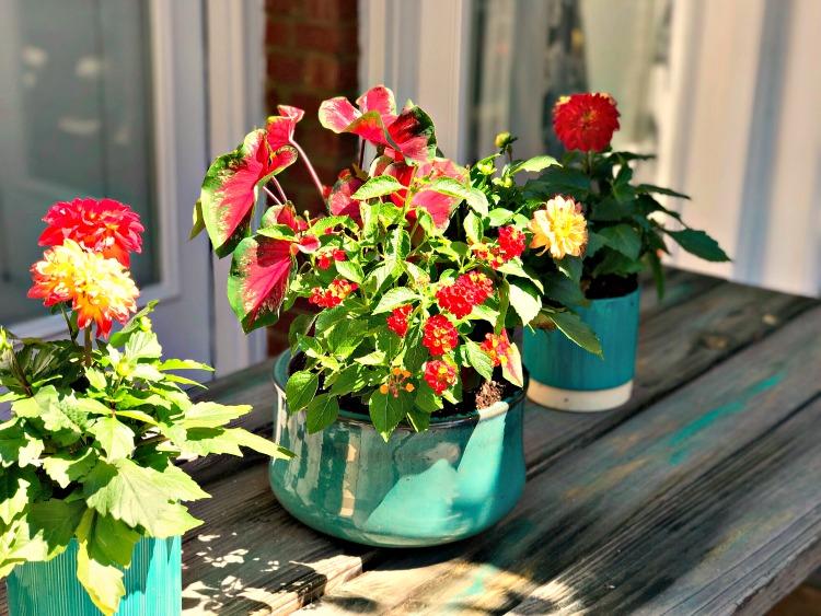 Monrovia Plants 4