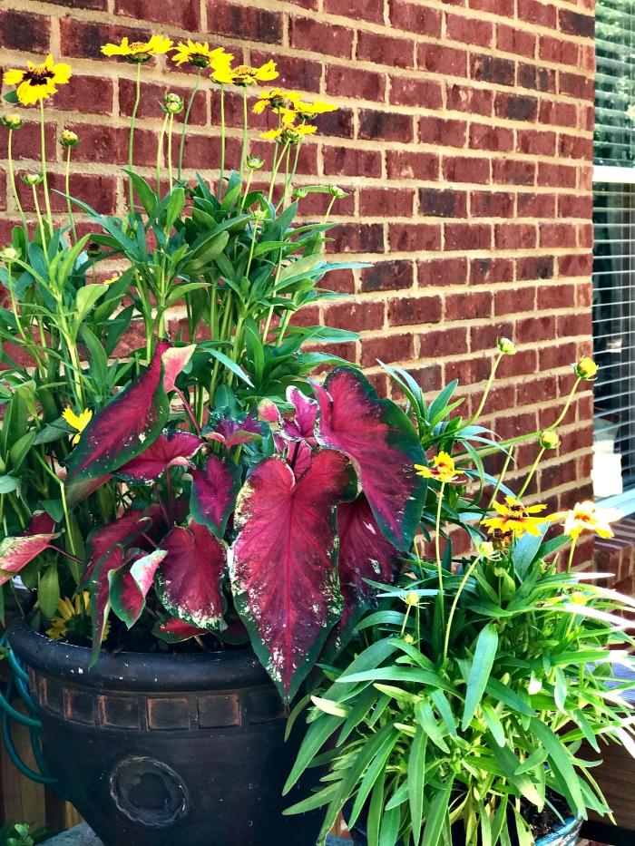 Monrovia Plants 5
