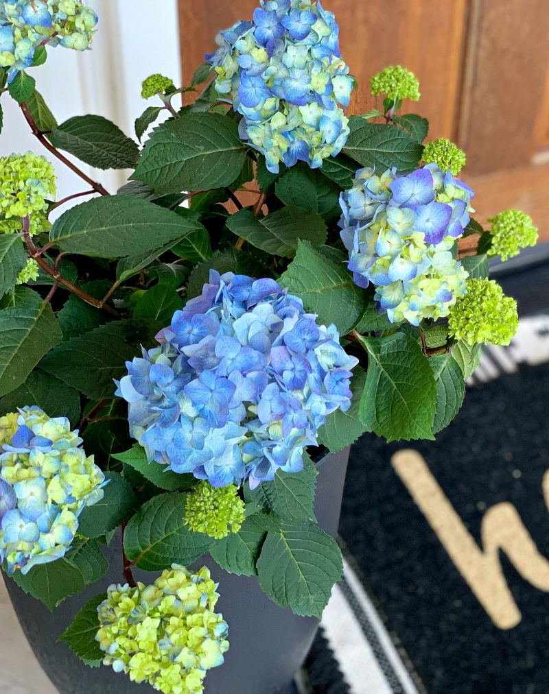 A Grown Up Summer Porch: Endless Summer® Hydrangeas have made my summer front porch absolutely stunning! Loving this fun porch decor!