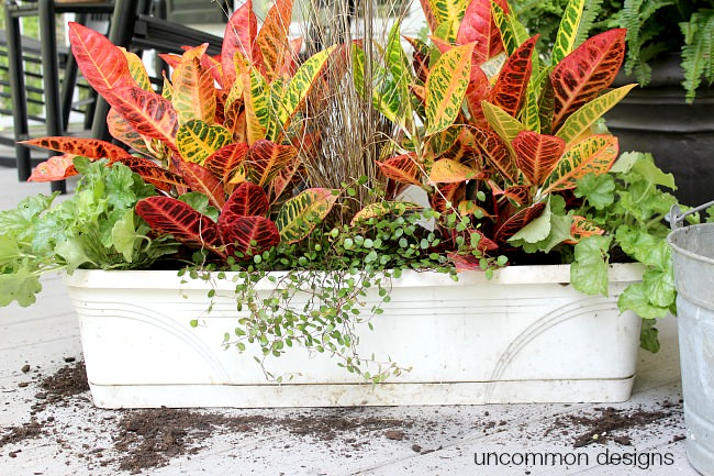 Window box planting 101. Thriller-Filler-Spiller
